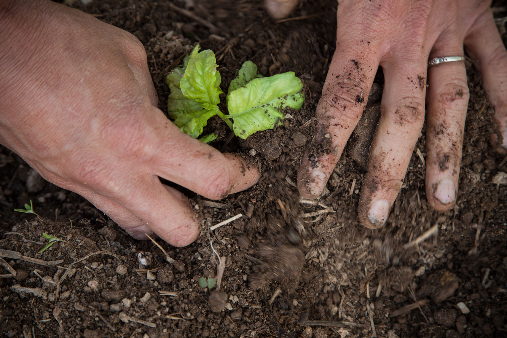 Metzger_2014_0520_Shannon_planting_206